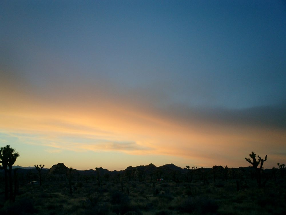 Joshua Tree National Park at Sunset 2