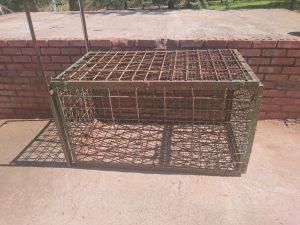 Daan's leopard cage