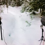 Sound Recording Forest In Winter 2 Surround Position With ORTF ms