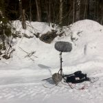 Sound Recording Forest In Winter Surround Position With ORTF ms