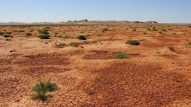 Mongolian Desert