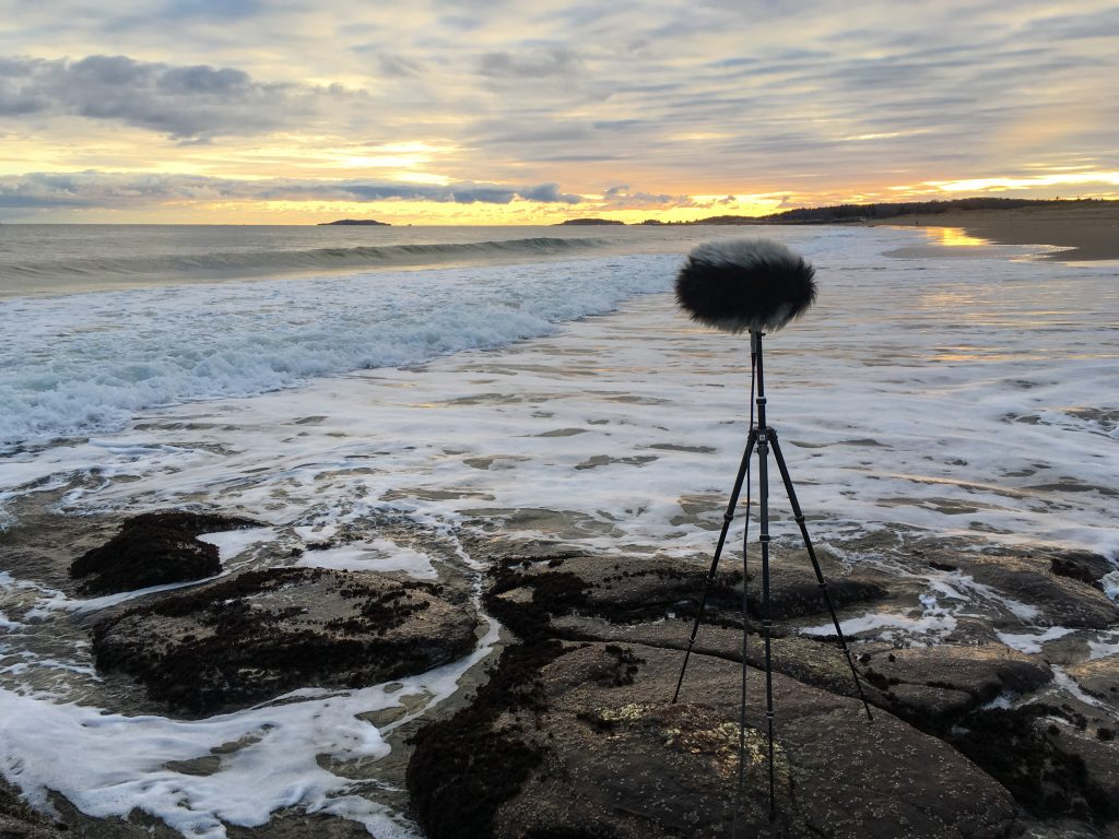 Reid state park ambisonic recording with st450 landscape