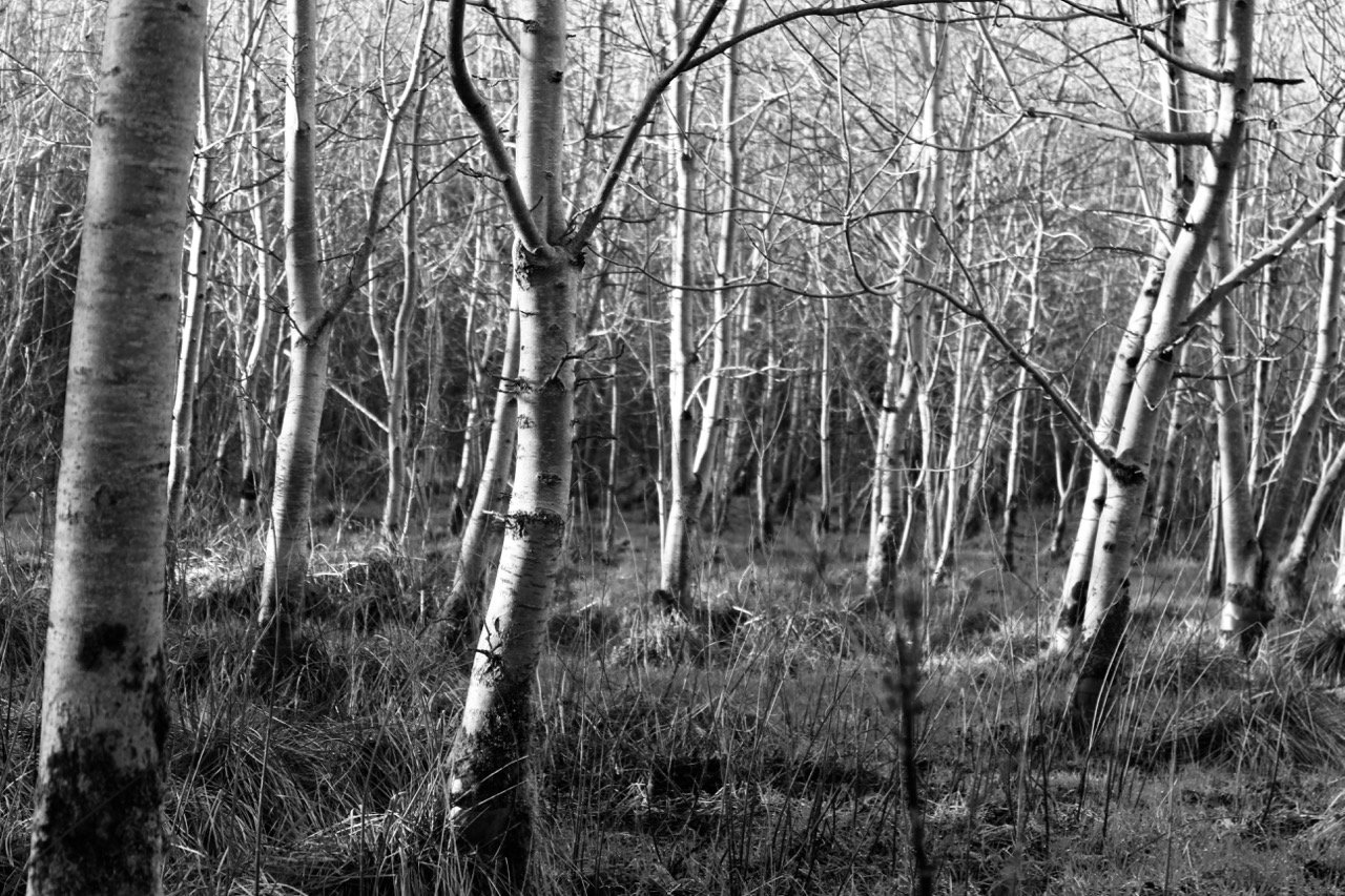 """Stormscape"" Field Recordings Captured From A Nature Reserve"