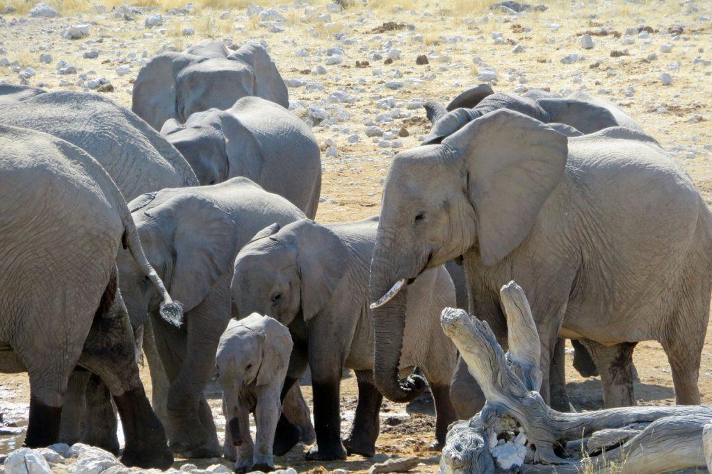 elephant 2780120 1280