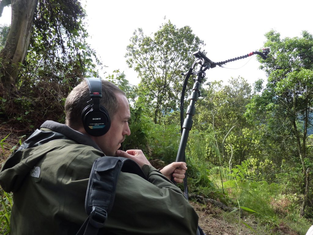 Uganda Gorilla Recording